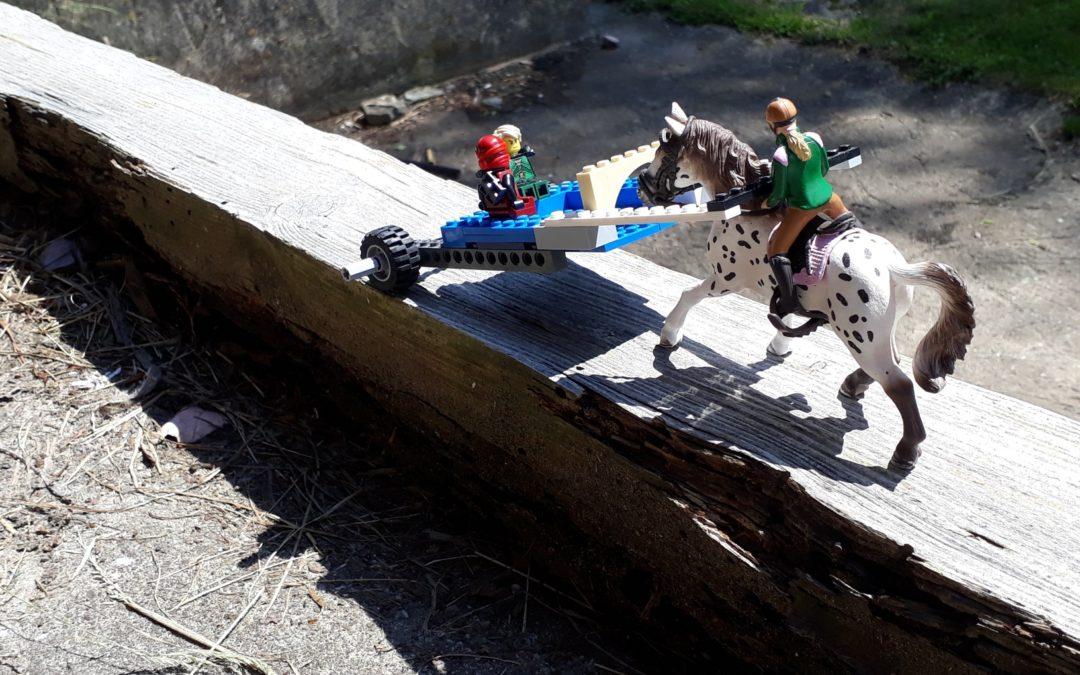 das Pferd – und die Wechseljahre